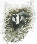 Click for more details of Badger (cross stitch) by John Stubbs