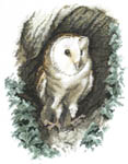 Click for more details of Barn Owl (cross-stitch kit) by John Stubbs