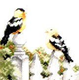 Click for more details of Birds for All Seasons (cross stitch) by Stoney Creek