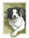 Click for more details of Border Collie (cross stitch) by John Stubbs