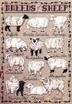 Click for more details of Breeds of Sheep (cross-stitch pattern) by Amaryllis Artworks