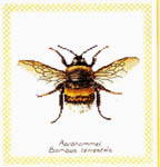 Click for more details of Bumble Bee (cross-stitch) by Thea Gouverneur