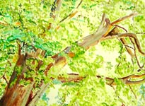Click for more details of Chesnut Tree by the Nith (watercolour on paper) by James Clifford
