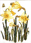 Click for more details of Daffodils (cross-stitch) by Janet Powers