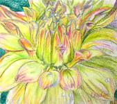 Click for more details of Dahlias (watercolour pencil) by Julie Peden