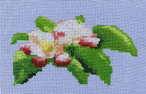 Click for more details of Darling Buds of May (cross stitch) by Anne Peden