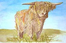 Click for more details of Hamish (watercolour on paper) by Julie Peden