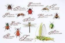 Click for more details of Insect Sampler (cross stitch) by Thea Gouverneur