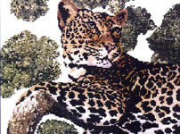 Click for more details of Lazy Leopard (cross stitch) by X's & Oh's