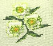 Click for more details of Lenten Roses (cross-stitch) by Anne Peden