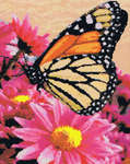 Click for more details of Monarch Beauty (cross stitch) by Kustom Krafts