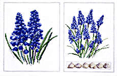 Click for more details of Muscari (cross-stitch) by Thea Gouverneur