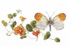Click for more details of Orange Tipped Butterfly with Nasturtiums (cross stitch) by Thea Gouverneur