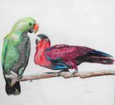 Click for more details of Parrots (watercolour pencil) by Julie Peden