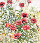 Click for more details of Pink Field Poppies (cross-stitch kit) by Thea Gouverneur