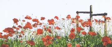 Click for more details of Poppies (cross stitch) by Thea Gouverneur
