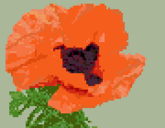 Click for more details of Poppy (cross-stitch) by Anne Peden