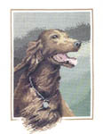 Click for more details of Red Setter (cross-stitch) by John Stubbs