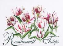 Rembrandt Tulips - cross-stitch kit by Thea Gouverneur