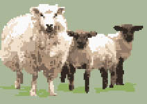 Click for more details of Sheep with Twin Lambs (cross-stitch) by Anne Peden