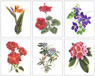 Click for more details of Six Floral Studies (cross stitch) by Thea Gouverneur
