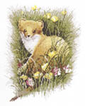 Click for more details of Stoat (cross-stitch kit) by John Stubbs