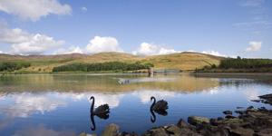 Click for more details of The Black Swans of Glenkiln (photograph) by Margaret Elliot