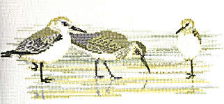Click for more details of Waders (cross-stitch kit) by Rose Swalwell