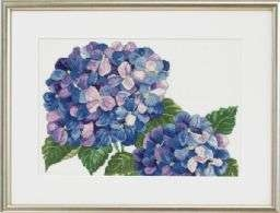 Hydrangeas - click for larger image