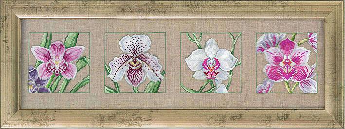 Orchid quartet - click for larger image