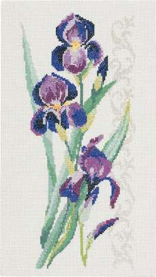 Irises - click for larger image
