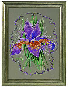 Iris sketch - click for larger image
