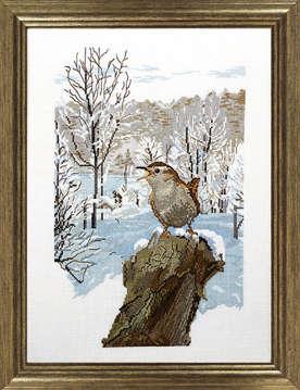 Winter wren - click for larger image