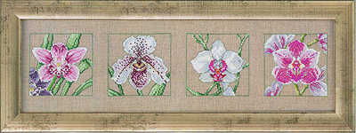 Orchid quartet - click for larger image