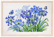 Agapanthus and blue butterfly - click for larger image