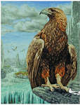 Click for more details of 3D Eagle (cross stitch) by maia