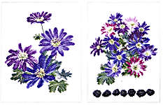 Click for more details of Anemone Blanda (cross stitch) by Thea Gouverneur