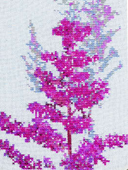 Click for more details of Astilbe (cross stitch) by Anne Peden