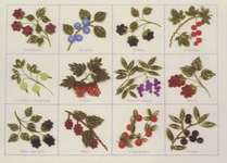 Click for more details of Berry Sampler (quilling) by Lake City Craft Co