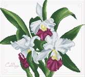 Click for more details of Bouquet of Orchids (cross stitch) by Needleart World