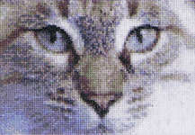 Click for more details of Cats - Jack & Luna (cross stitch) by Thea Gouverneur