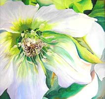 Click for more details of Christmas Rose (oil on canvas) by Shirley Rothwell