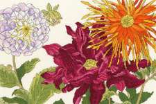 Click for more details of Dahlia Blooms (cross stitch) by Bothy Threads