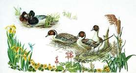 Click for more details of Duck Pond (cross stitch) by Thea Gouverneur