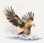 Click for more details of Eagle in Flight (cross stitch) by John Clayton