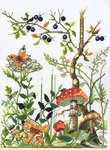 Click for more details of Forest Floor (cross stitch) by Permin of Copenhagen