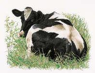Fresian Cow Lying Down