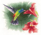 Click for more details of Hummingbird in Flight (cross stitch) by John Clayton