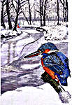 Kingfisher in Winter
