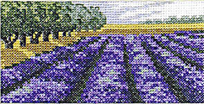 Lavender Fields and Woods